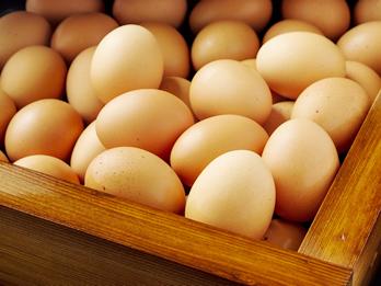 地卵の有精卵